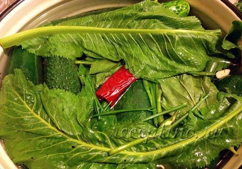 вкусный рецепт приготовления малосольных огурцов